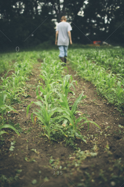 Boy walking in a corn field