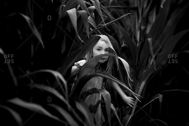 Girl in a cornfield