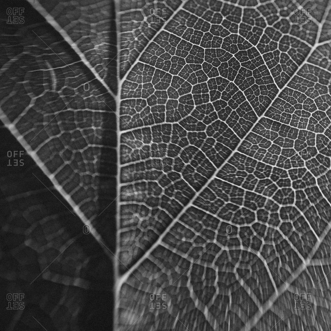 Close up of the back of a leaf