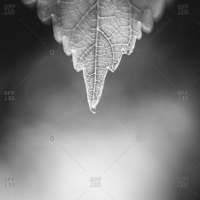 Close up of the tip of a leaf