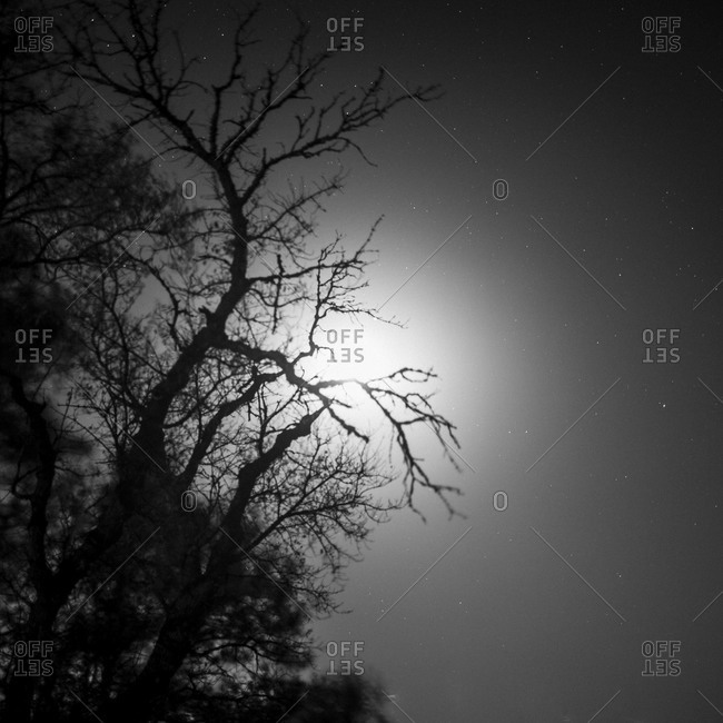 Moon shining through the twisted branches of a tree