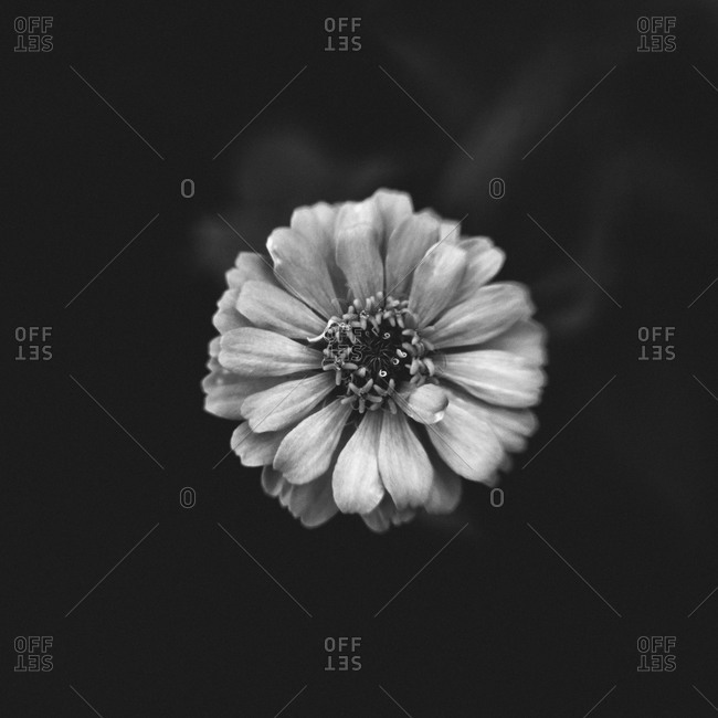 Top view of a single flower