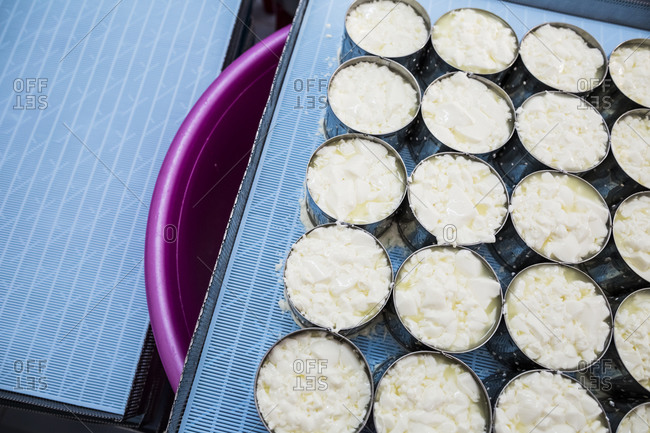 Cheese-making in the mountains of Dalat, in central Vietnam. Camembert cheese is portioned into molds during its first step.