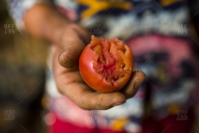 A half-eaten tomato, Dalat, in central Vietnam.