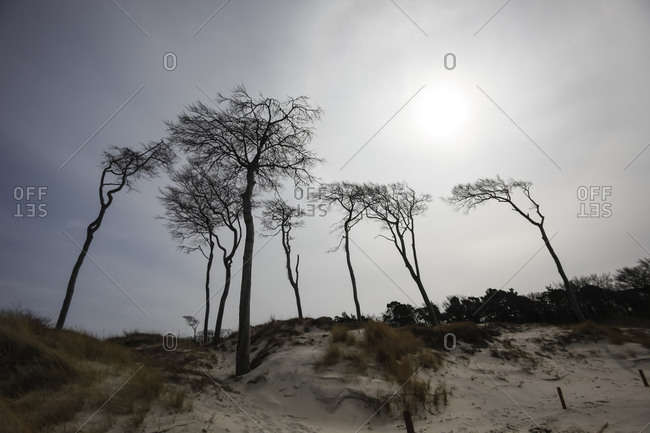 West beach, Trees - Offset Collection