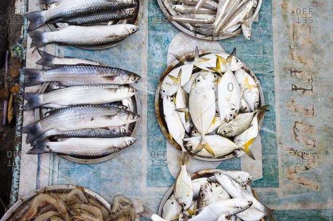 Variety of freshly caught seafood in metal bowls