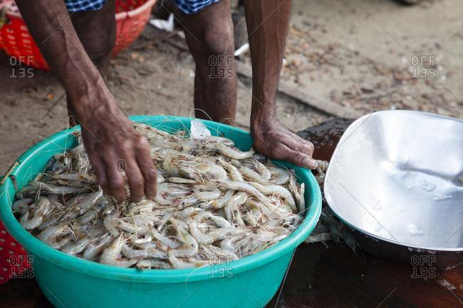 Man weighing shrimp