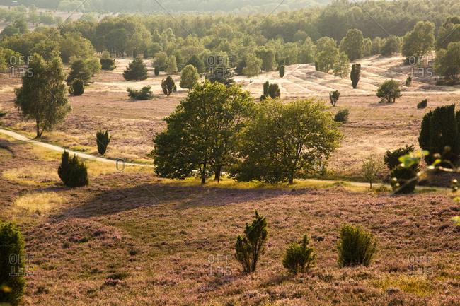 Lueneburg Heath, Lower Saxony, Germany
