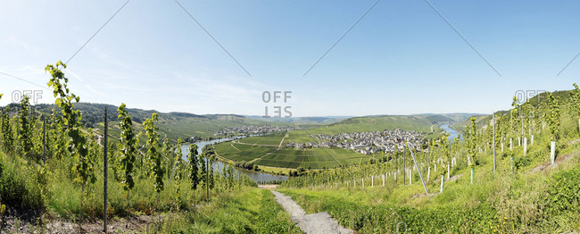 Panoramic view of the Moselle river and vineyards near Trittenheim, Rhineland-Palatinate, Germany