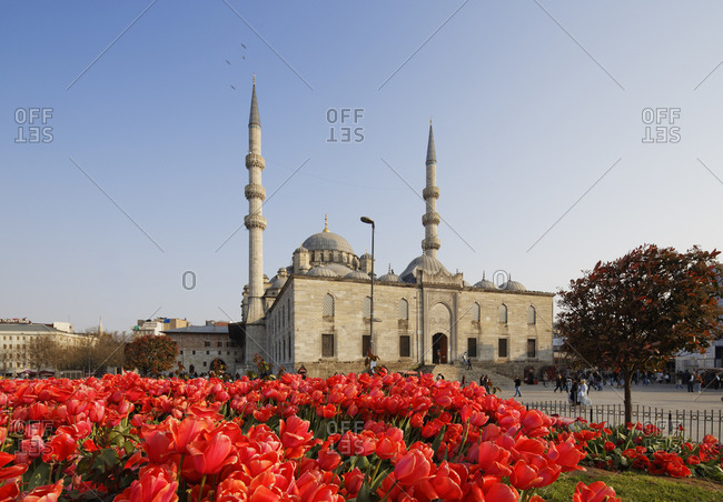 Tulip bed in front of Yeni Camii, Istanbul, Turkey