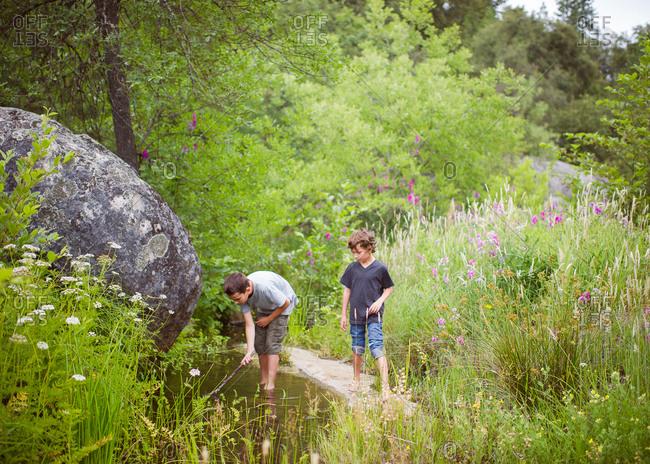 Boys walking in a forest