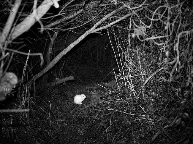 Small white rabbit sitting in a burrow