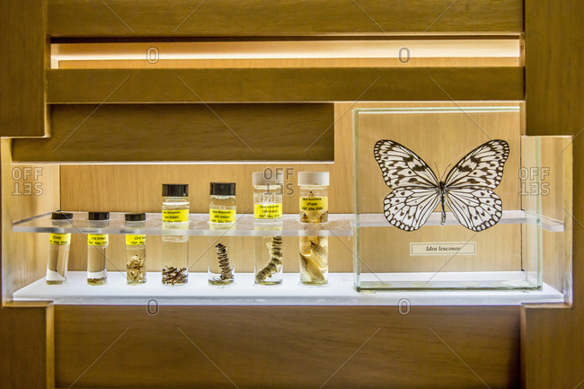 Butterfly specimens in research lab