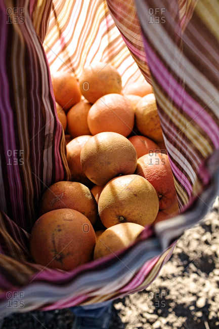 Close up of grapefruits in a canvas bag