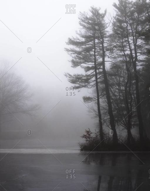 Frozen river in a foggy forest