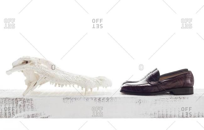 Alligator skull and leather shoes on white background