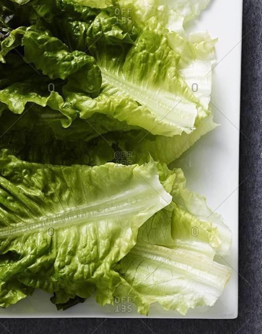 Overhead view of fresh lettuce