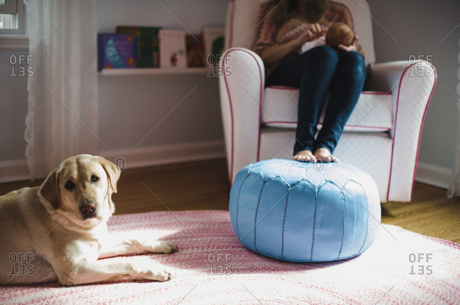 Yellow Labrador sits at the foot of mother and baby in a chair