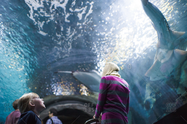 Young girl looks up at a shark in a water tunnel at an aquarium