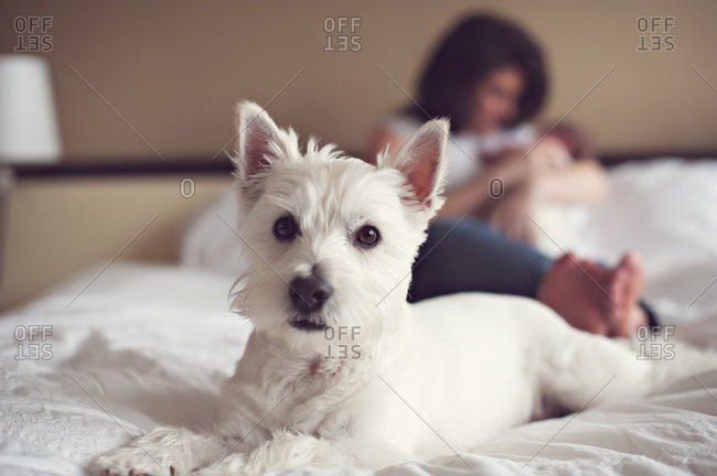 Dog sits on bed with mother and baby in the background