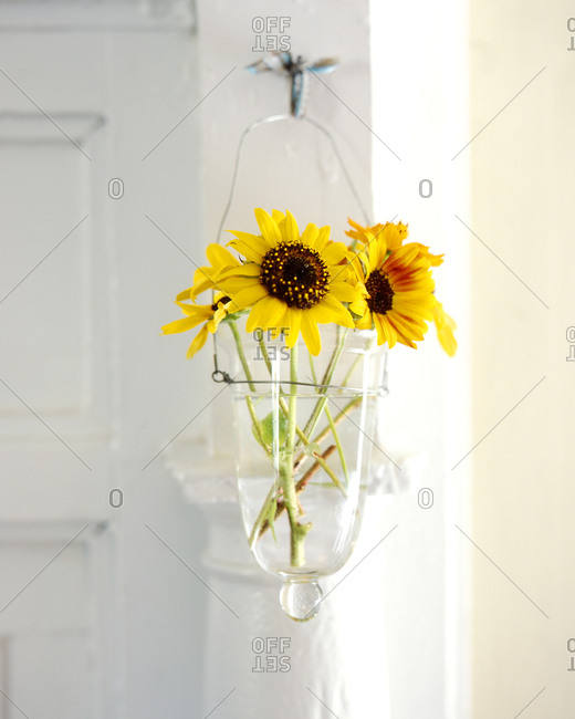 Sunflowers in a vase hooked on a door