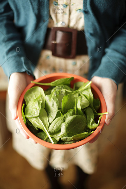 Woman holding fresh baby spinach in a bowl
