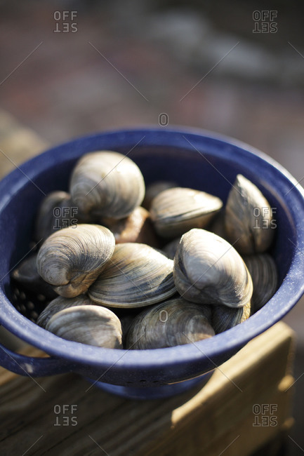Close up of fresh clams in a bowl