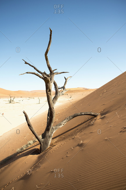 Sand dune with dead trees, Sossusvlei, Namibia, Africa
