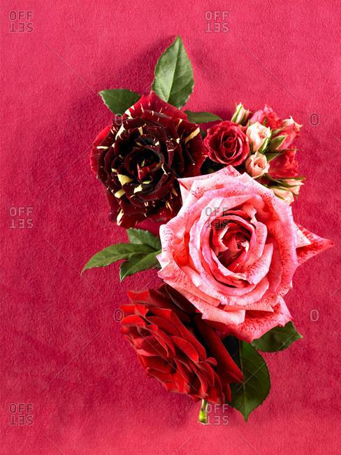Romantic flower arrangement of various roses