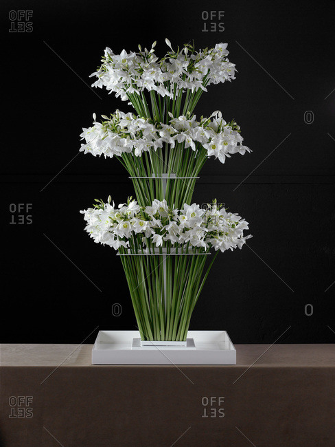 White narcissus in a vase