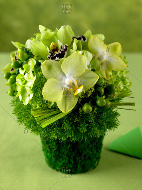 Green orchids and greenery - Offset