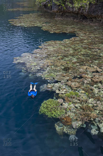 Woman snorkeling along edge of healthy coral reef, tropical Pacific Ocean, Coral Triangle region.