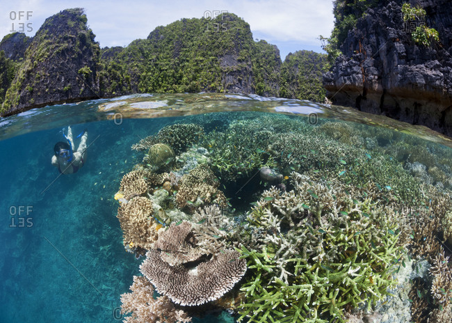 Split over-under view of woman skin diving along healthy coral reef amidst the stunning beauty of the Raja Ampat island archipelago, eastern Indonesia.