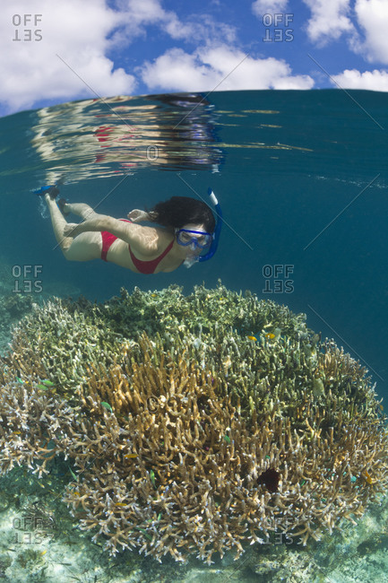 Woman swims over corals along the edge of a shallow reef. tropical Indo-Pacific Ocean