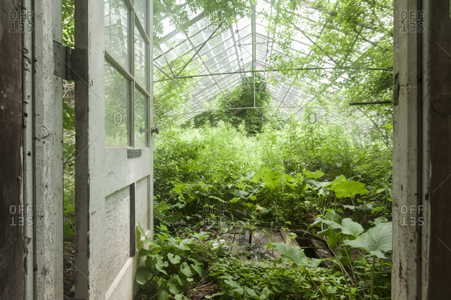 Overgrown greenhouse from the Offset Collection stock photo - OFFSET