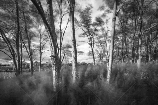 Mist filled woods