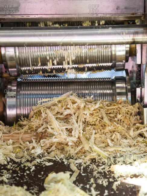 Fresh sugarcane being crushed in a grinder in Mumbai, Bombay, Western India