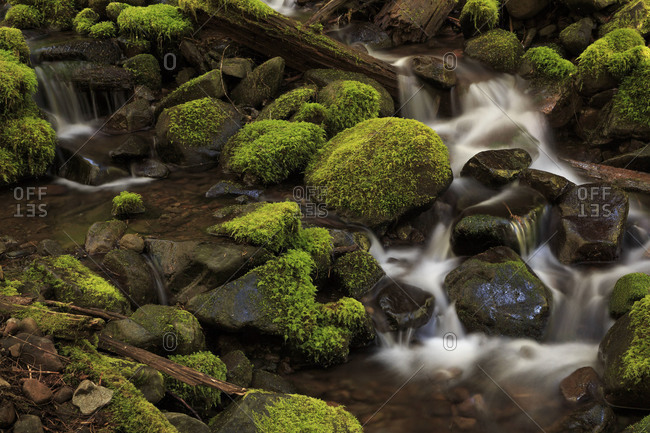 Rapids of a tributary of Sol Duc River in the Olympic National Park in Washington