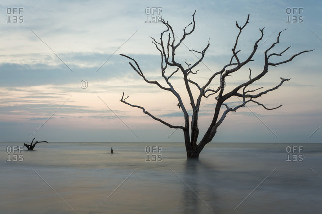 Dead tree holding out against the rising tide