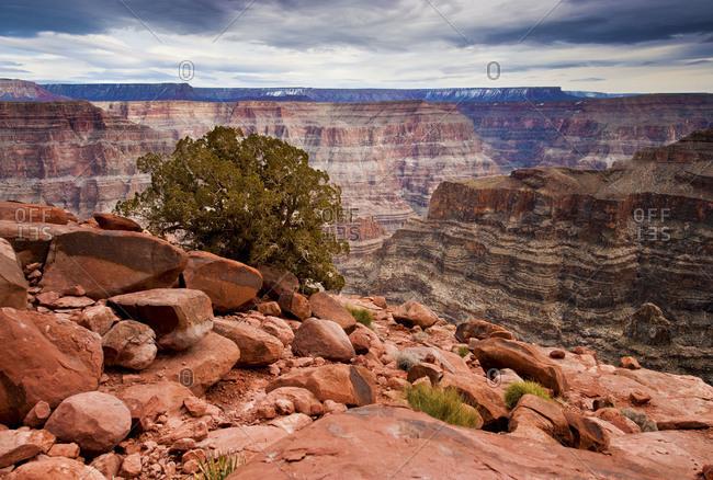 A single tree in the Grand Canyon, Arizona