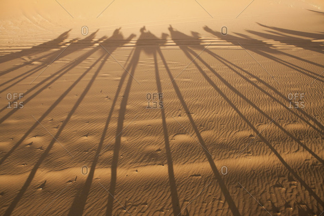 Shadows of camel and people cover a sand dune landscape