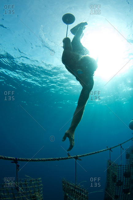 A worker reaches to tie on a buoy to help float oysters on a Tahitian pearl farm.