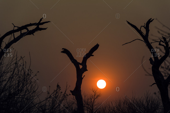 Dead trees reach toward a scorching sunset during the dry season