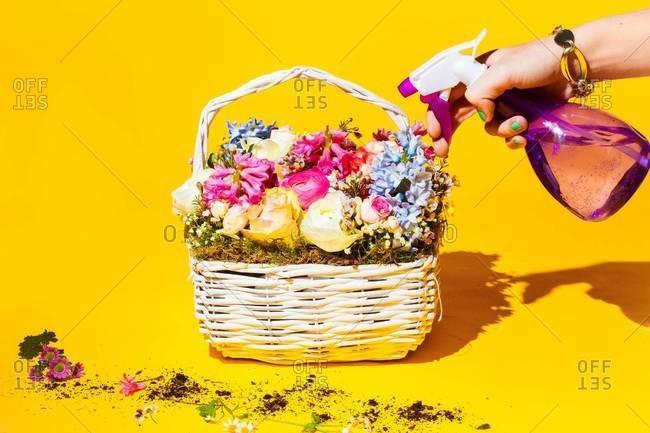 Spraying cut flowers