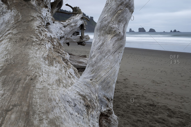 Close up of driftwood on the beach