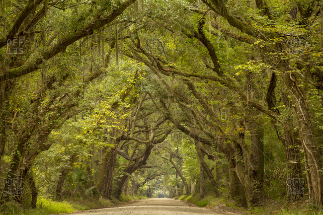 View of Botany Bay Road, Edisto Island
