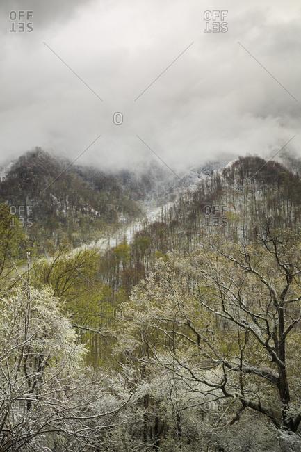 Great Smoky Mountains, Tennessee, North Carolina