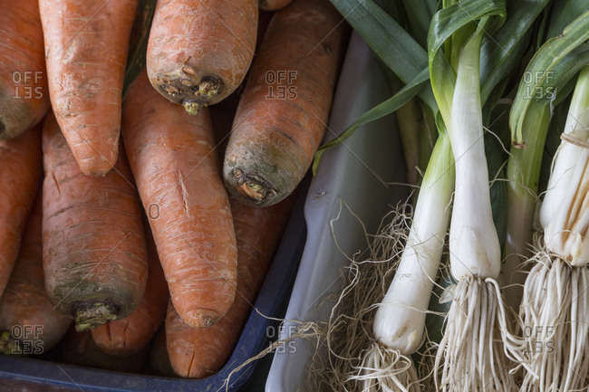 Close up view of carrots and scallions at a farmers market