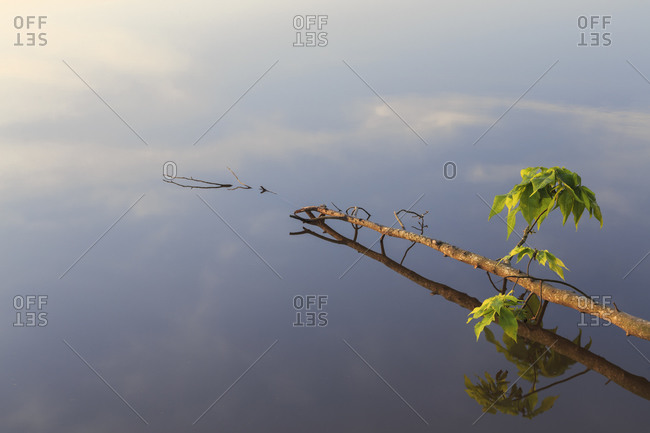 Branch in Lake Crabtree, North Carolina