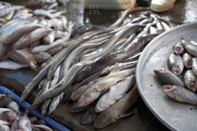 Fish at the Duong Dong market